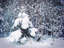 Winter forest. Royalty Free Stock Image