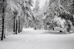 Winter forest landscape with snow Royalty Free Stock Photography