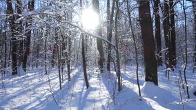 Winter forest landscape with snow and sunlight. Through trees stock video footage