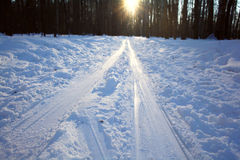 Winter forest landscape on  sunny day Stock Photos