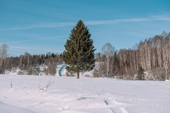 Winter forest landscape. Taiga in the winter. Siberian forest in winter. Snow covered trees. Christmas trees under the snow stock photos