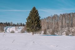 Winter forest landscape. Taiga in the winter. Siberian forest in winter. Snow covered trees. Christmas trees under the snow royalty free stock image