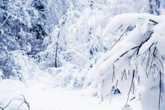 Winter Forest Landscape Tree mit Schnee-Hintergrund Lizenzfreie Stockfotografie