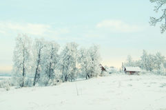 Winter Forest Landscape Tree with Snow Background Royalty Free Stock Image