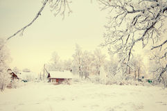 Winter Forest Landscape Tree with Snow Background Stock Photos
