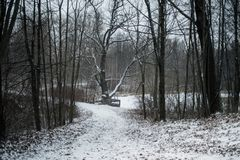 Winter forest cold day tree snow. Winter forest landscape tree snow day royalty free stock photography