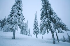 Winter forest landscape trees in snow covered with white frost Royalty Free Stock Photo