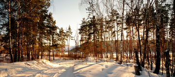 Winter forest 1 Royalty Free Stock Photography