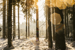 Winter Forest with Lense Spots Royalty Free Stock Images
