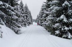 Winter forest with loipe for cross-country skiing.  Royalty Free Stock Photos