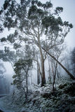 A winter in the forest. A lonely stand of trees covered with snow Royalty Free Stock Image