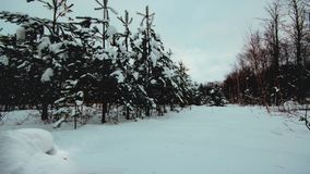 Winter forest looped zoom stock footage