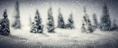 Winter forest made of miniature toy trees. Focus on snow foreground. Royalty Free Stock Photography