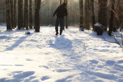 Winter forest man Royalty Free Stock Image