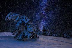 Winter forest and milky way Stock Photography