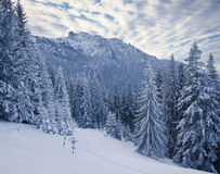 Winter forest Stock Image