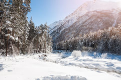 Winter forest and mountain river at sunny day Royalty Free Stock Images