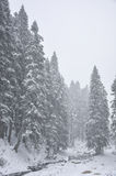 Winter in the forest. Winter in the mountain forest with trees and fresh snow Stock Image