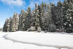 Winter in the forest. Winter in the mountain forest with trees and fresh snow Stock Photo