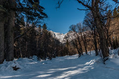 Winter forest in mountaines. Sunny day. Stock Images
