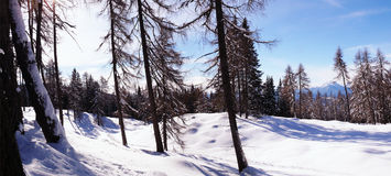 Winter forest in the mountains Stock Image