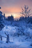 Winter forest in mountains Royalty Free Stock Photography
