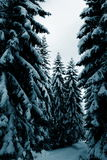 Winter in forest Stock Photo