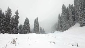 Winter forest in the mountains. stock footage