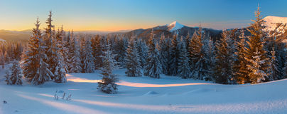 Winter forest in the mountains Royalty Free Stock Photography