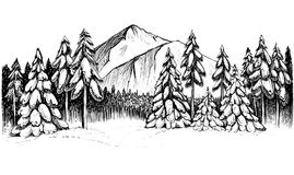 Winter forest in mountains hand drawn illustration. Winter forest in mountains, sketch. Black and white vector illustration of snowy firs, pines, and peak. Hand vector illustration