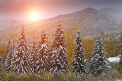 Winter forest in the mountains Royalty Free Stock Photo