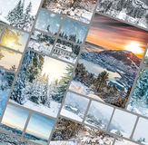 Winter forest in the mountains Stock Photos