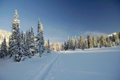 Winter forest in mountains, ski-track Royalty Free Stock Image