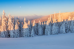 Winter forest in mountains Royalty Free Stock Images