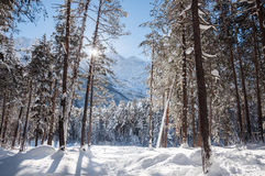 Winter forest and mountains at sunny day Royalty Free Stock Image