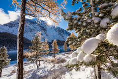 Winter forest in mountains Royalty Free Stock Photo