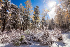 Winter forest in the mountains Royalty Free Stock Images
