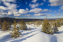 Winter forest in the mountains Stock Photography