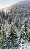 Winter forest mountainside Royalty Free Stock Photography
