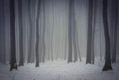 Winter in the forest with mysterious fog Royalty Free Stock Image
