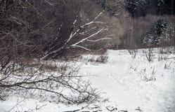 Winter forest nature landscape stock photo