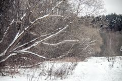 Nature landscape in winter stock photography