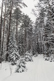 Winter forest nature snowy landscape outdoor background. Pine forest, winter. Snow covered trees in the winter forest with road Stock Photo