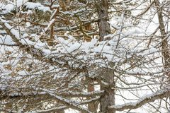 Branch of tree under snow Stock Photography