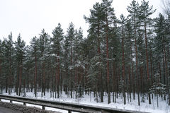 Winter forest near the road full of snow Royalty Free Stock Image