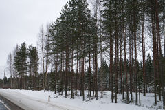 Winter forest near the road full of snow Stock Photos