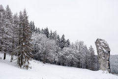 Winter forest. Near the rock in Ojcowski National Park (Poland Royalty Free Stock Image