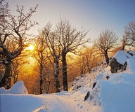 Winter. In a forest at nice sunset Royalty Free Stock Image