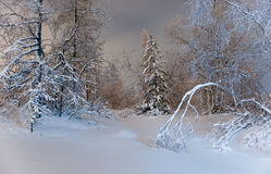 Winter forest at night Stock Image