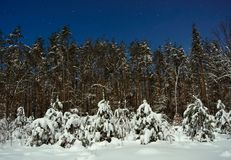 Winter forest at night time Stock Photo